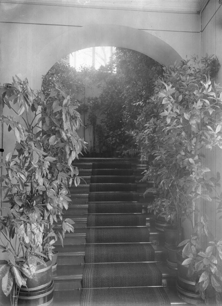 Näkymä nouseviin rappusiin, joiden jokaisen askelman reunoihin on asetettu korkeat pensasmaiset kasvit ruukuissa. Rappusten alkupäässä on holvikaari. Mustavalkokuva.